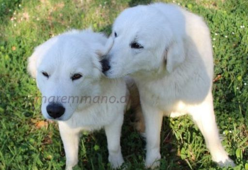 Nica & Nana